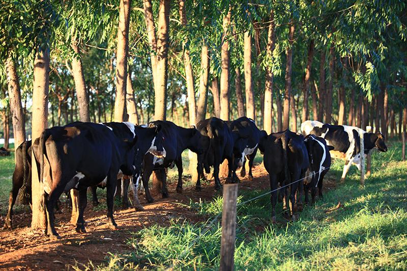 Case - Fazenda Berro D'Água | Gepec