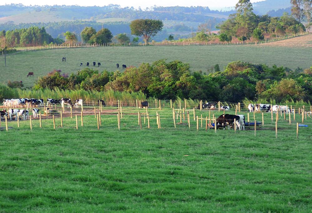 Case - Qualidade do Leite na Prática - Fazenda Gameleira