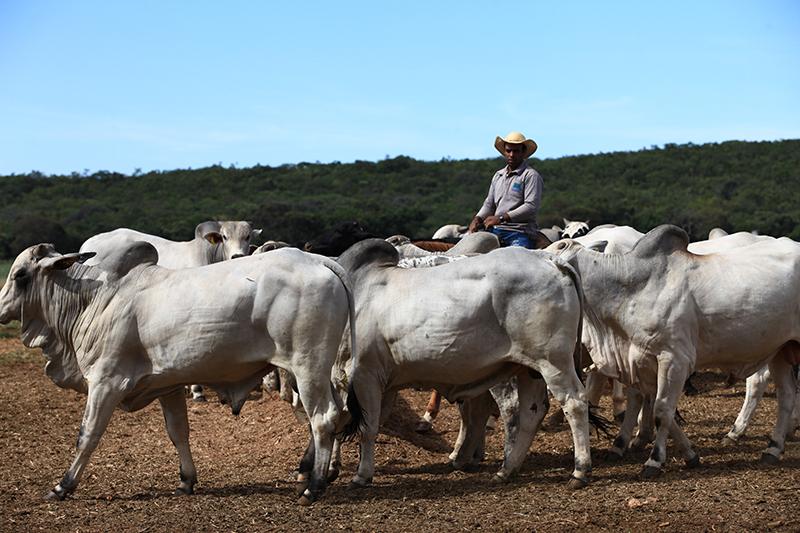 Case - Fazenda São Gabriel | Gepec